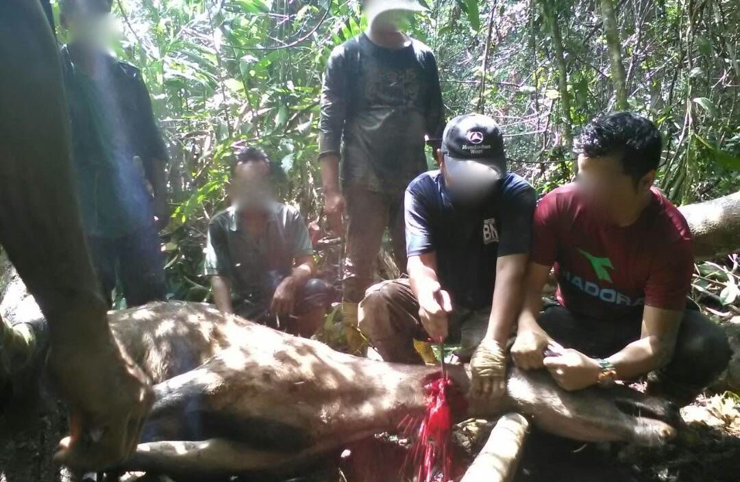 pisau sembelih victorinox cap payung rusa hutan sarawak